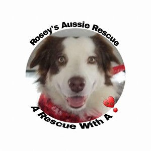 Dogs for adoption at Rosey`s Aussie Rescue in Bloomington, Illinois