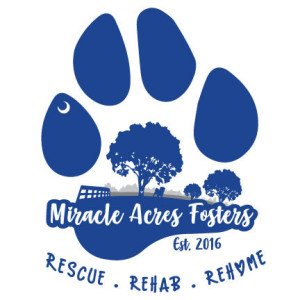 Animals for adoption at Miracle Acres Fosters in Anderson, South Carolina