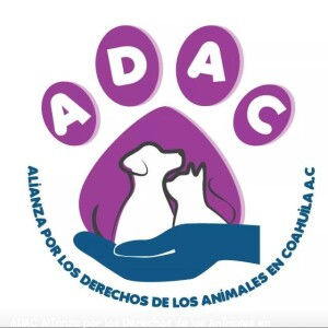 Animals for adoption at Alianza Por Los Derechos De Los Animales  De Coahuila AC in Saltillo, Coahuila