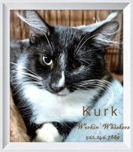 Tuxedo Rescue Cats For Adoption Near Auburn California Petcurious